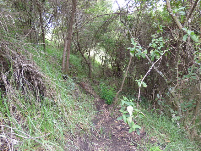 Finca Chachatoi Permacultura, Agricultura-Natural en Pasto Colombia