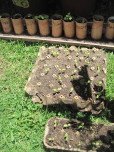 Semilleros y reciclaje